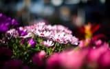 Обои: цветы, макро, природа