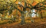 Обои: дерево, природа, осень