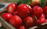 Обои: яблоки, корзина, лето, сливы, солнце