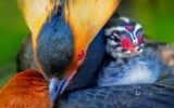 Обои: птица, перья, птенец, краски