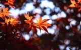 Обои: осень, листья, боке, размытость