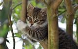 Обои: котёнок, ветки, на дереве