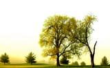 Обои для рабочего стола: поле, природа, деревья, лето