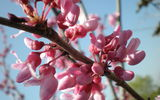Обои: ветка, небо, розовый, весна