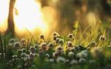 Обои: природа, утро, растения, свет, трава, клевер