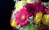 Обои: розы, жемчужина, цветы, жёлтые, желтые, цветок, герберы, букет, красивые, жемчуг
