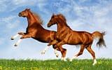 Обои: лошади, поле, животные, небо