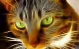 Картинки на телефон: кошка, животное, кот, глаза