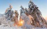 Обои: зима, лес, свет, природа, солнце, снег, деревья