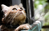 Обои: кот, глаза, котэ, смотрят, кошка