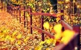 Обои: забор, листья, дерево, деревья, ограждение, макро