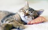 Обои: Кот, сон, милый