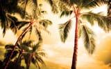 Обои: пальмы, Лето, красиво