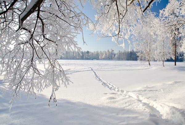 картинки рабочего стола зима природа № 264634 без смс